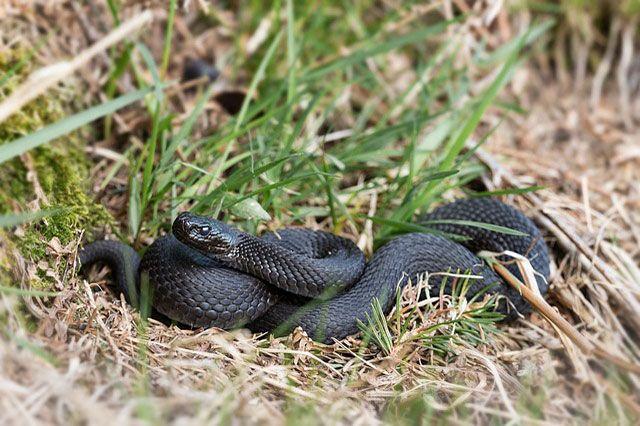 Hábitat de la serpiente