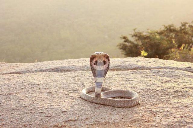 Hábitat de serpientes