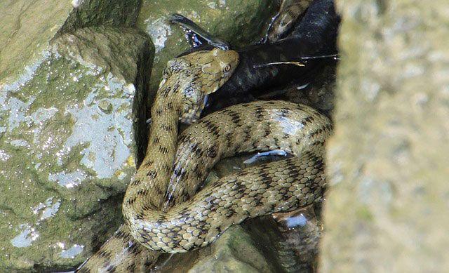 Qué comen las serpientes, alimentación de las serpientes