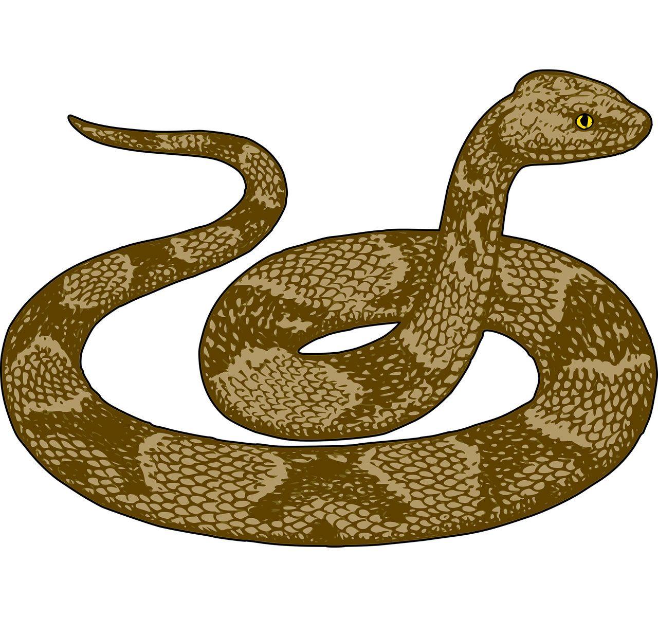 Dibujos De Serpientes A Color Lápiz Y En 3d