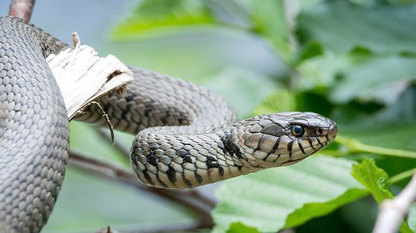Serpiente un animal fascinante