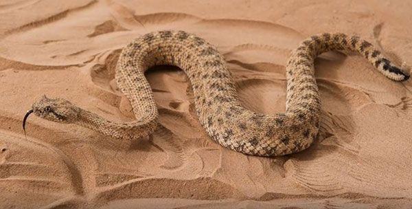 serpiente desplazandose