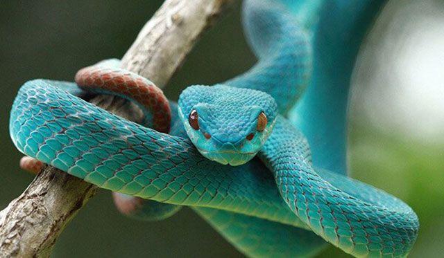 Serpiente – Significado Espiritual y simbólico