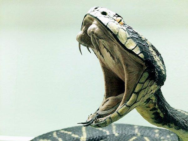 serpiente características