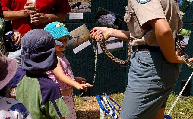 serpientes como mascotas, serpientes domésticas