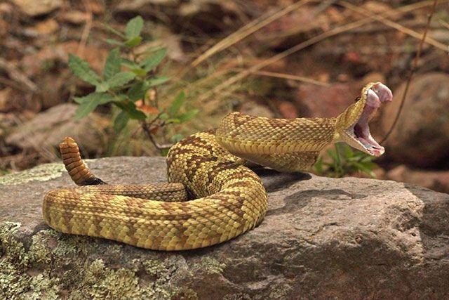 Veneno de serpiente